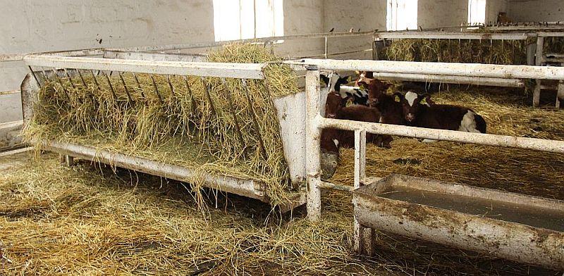 Agrofirm Svitanok