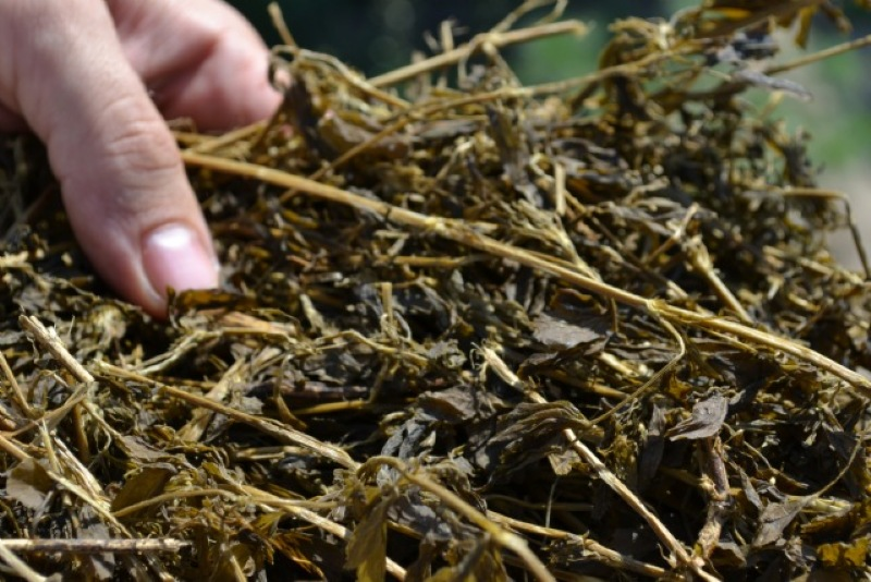 grass silage quality in malaysia Even dubious quality silage has application going onto ground in a short period can be problematic due to luxury uptake which can increase the risk of grass.