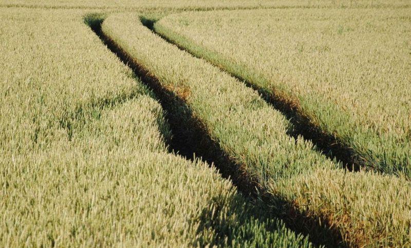 Местные советы поддерживают решение о продлении земельного моратория